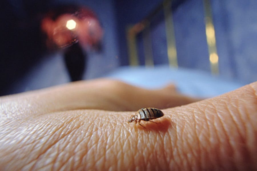 Nine Different Ways To Get Rid Of Bed Bugs